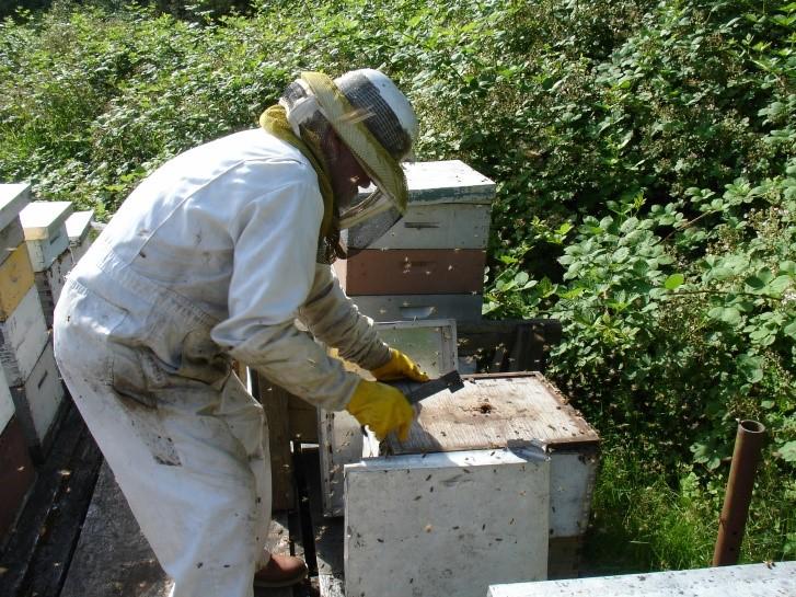 Bijenkorf bouwen