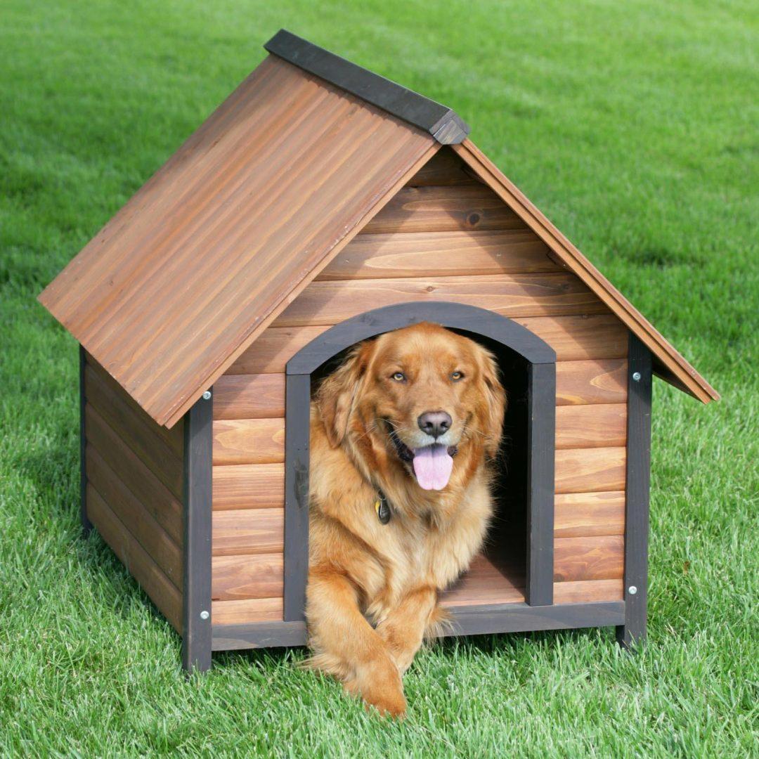 Hondenhok maken dit moet je echt weten klik hier - Dog house images free ...