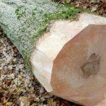 Steigerhouten planken kopen? Waar kan ik dat allemaal doen?