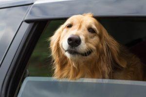 Hondenmand Bouwtekening