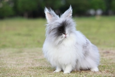 buiten konijnenhok