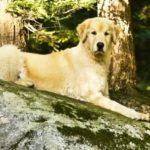 Een steigerhout hondenmand maken? Lees hier hoe!