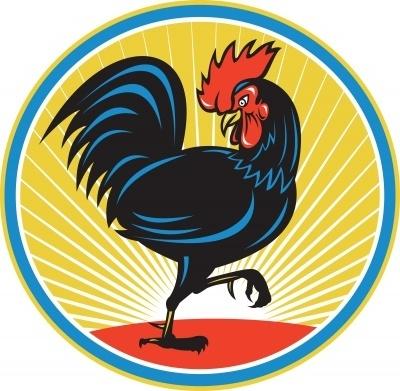 kippenren bouwen